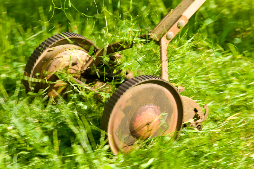 Antique lawn mower in action